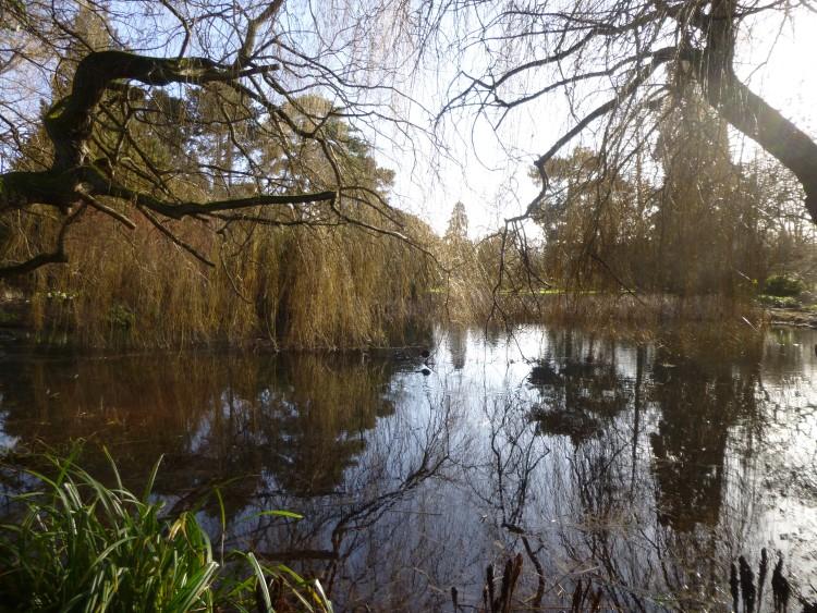 Cambridge Bot Gardens 019