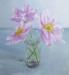 From my September Garden - Sally Pudney