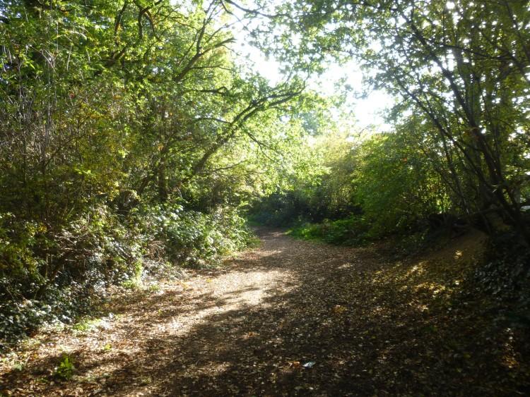 Grymes Dyke 1