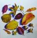 From my November Garden - Sally Pudney