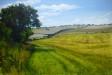 Peddars Way III: Harpley Dams - Sally Pudney