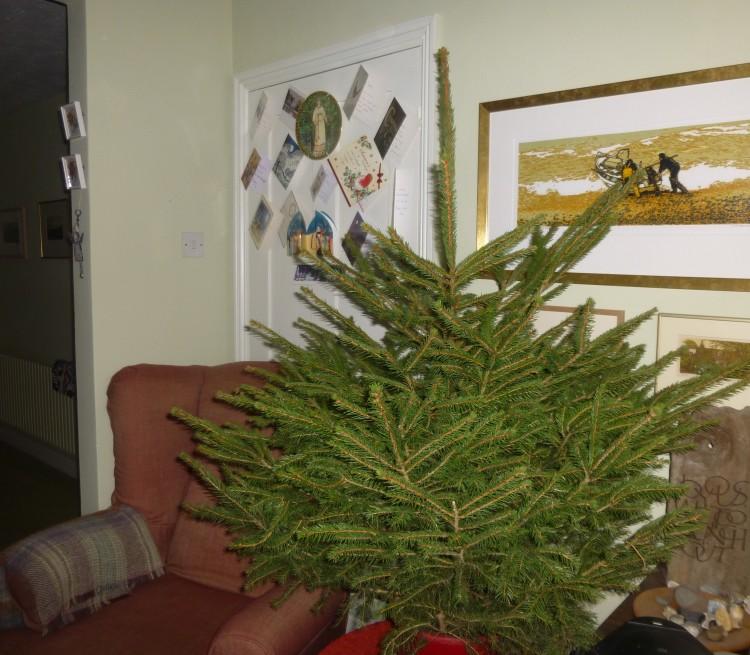 Christmas Tree '15 1