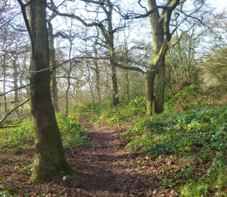 Hillhouse wood January 4