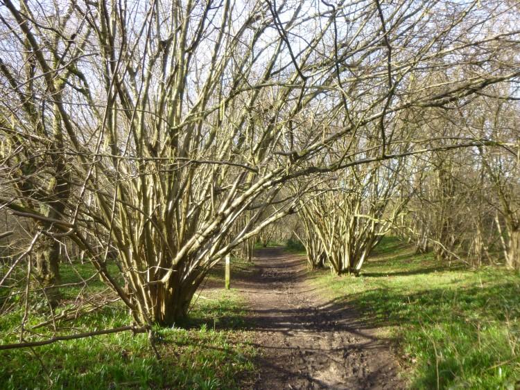 Hillhouse wood February 2