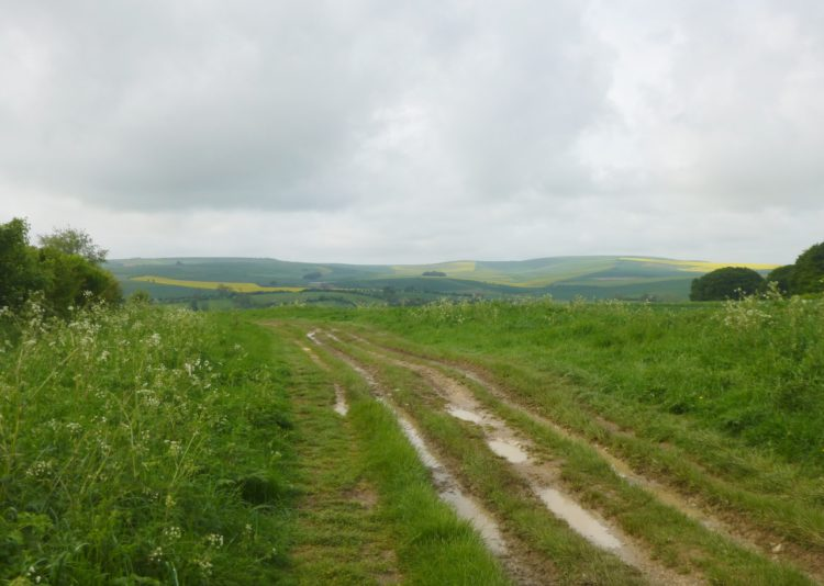 Near the start of The Ridgeway, just west of Avebury