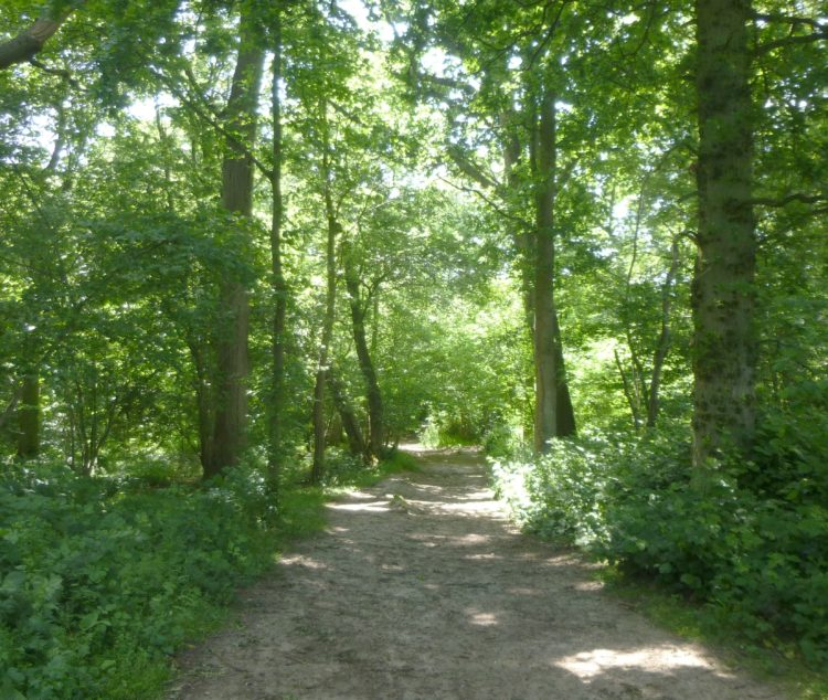 The entrance to the wood