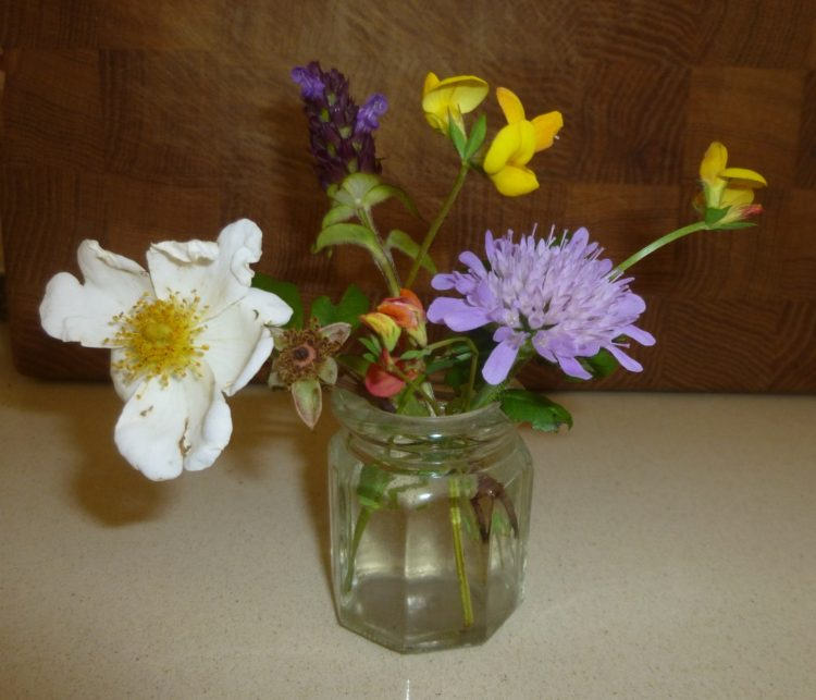 Flowers, including field rose, Birds food trefoil and field scabious