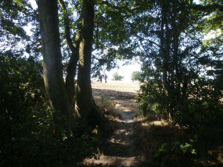 Essex Wood August 020