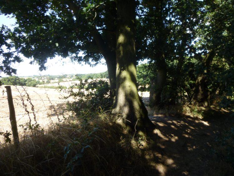 Essex Wood August  023