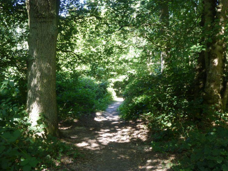Essex Wood August 029