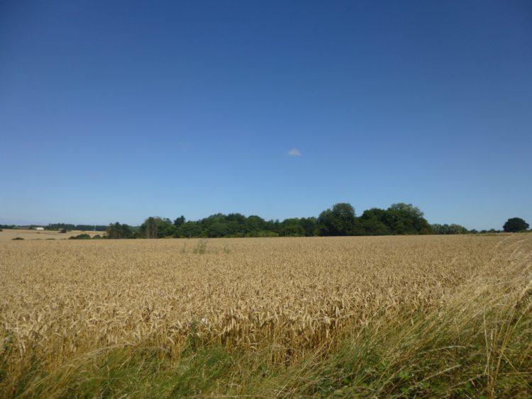 Essex Wood August  034