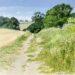 Bridleway north of Oliver's - Sally Pudney