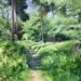 Footpath through Lexden Gathering Grounds - Sally Pudney