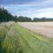 Essex Field: July (Evening) - Sally Pudney