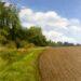 Essex Field: August - Sally Pudney