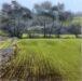 Essex Field: December - Sally Pudney