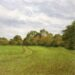 Essex Field: October - Sally Pudney