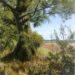 Essex Field: September - Sally Pudney