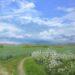 Field Path near Oliver's - Sally Pudney