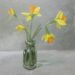 Flowers of March - Sally Pudney