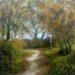 Woodland Walk: Autumn - Sally Pudney